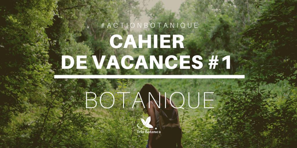 Cahier de vacances #1 - Initiation botanique