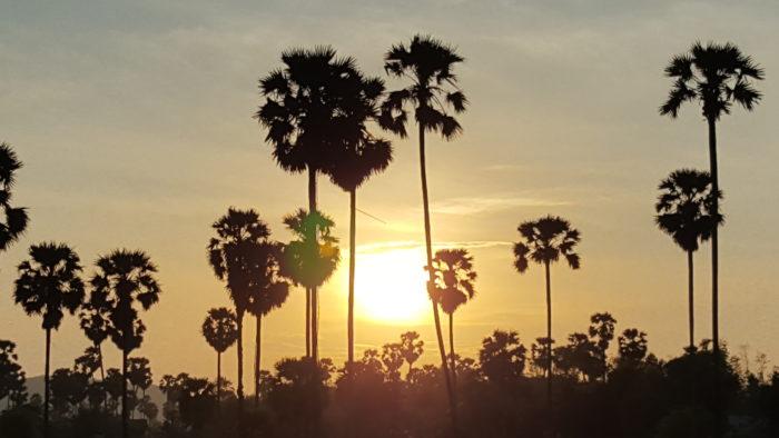 Coucher de soleil sur les palmiers à sucre, province de Kampong Chhnang