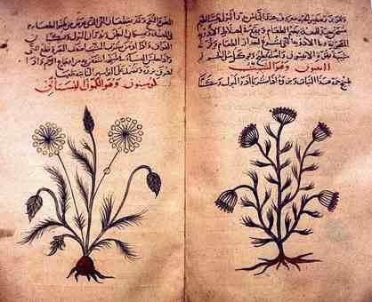 Arabic_herbal_medicine_guidebook