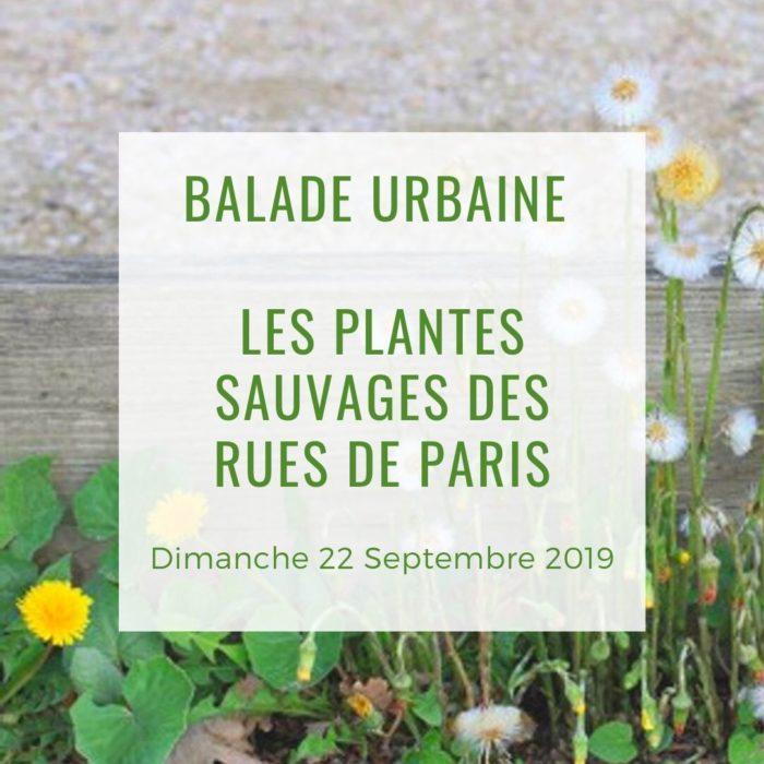 Balade urbaine Les plantes sauvages des rues de Paris