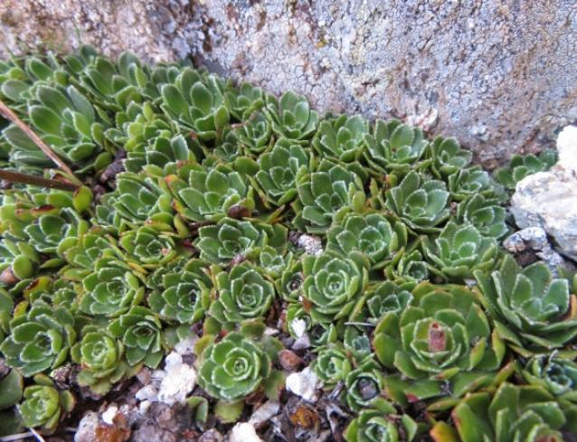 Plante indéterminée n°2