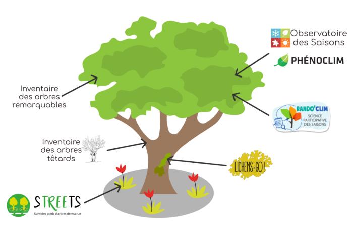 Les projets de la communauté Auprès de mon arbre