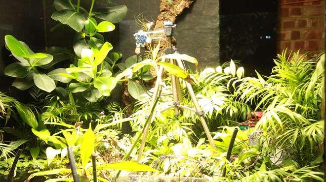 L'appareil à selfie au milieu des plantes avec Pete la fougère