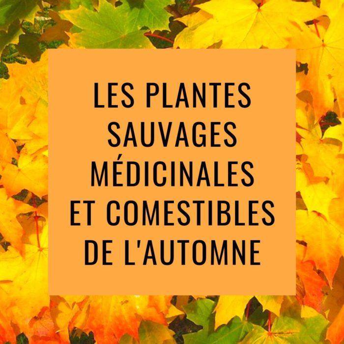 Les plantes sauvages médicinales et comestible d'Automne au Bois de Vincennes