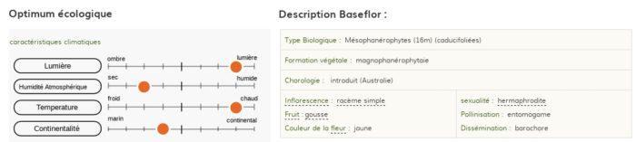 Description et écologie de Acacia baileyana F.Muell.
