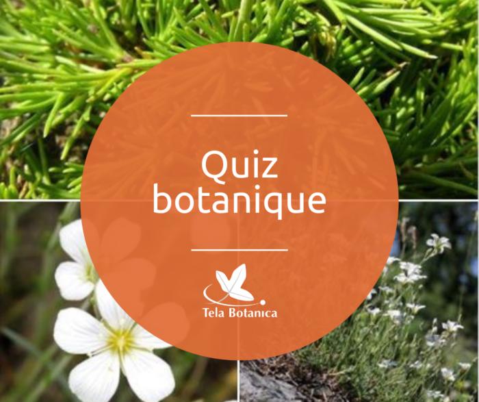 quiz botanique (1)