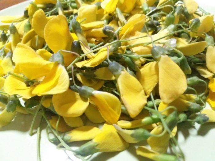 Fleurs de sesbanie de Java