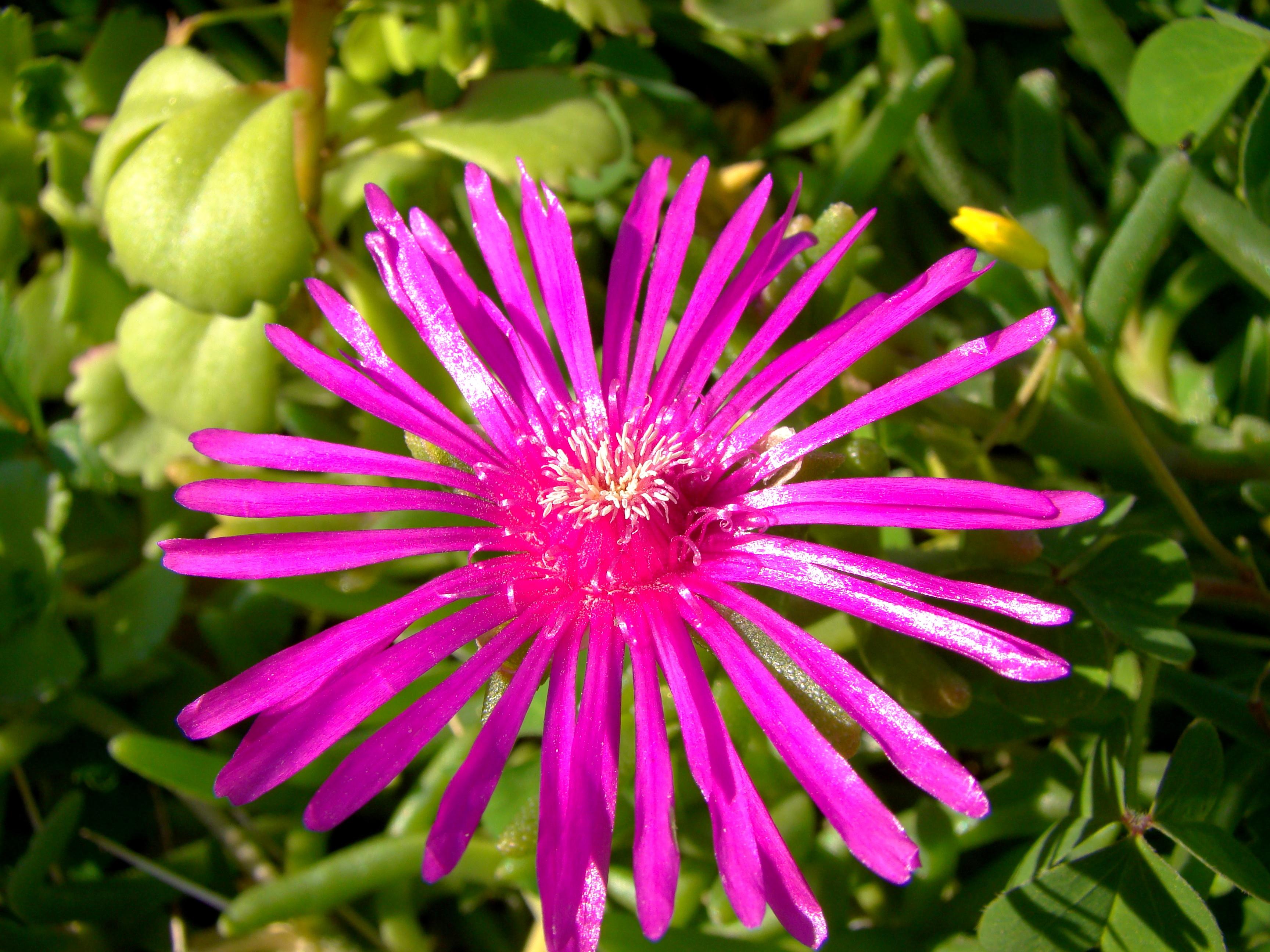 Graines De Fleurs Qui Poussent Très Vite les plantes envahissantes, la nouvelle « chasse aux