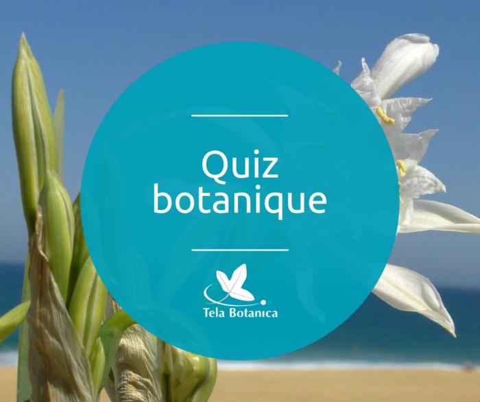 quiz botanique