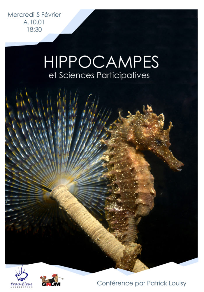 Affiche Hippocampe copie