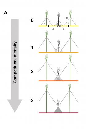 Figure_compet_plantes