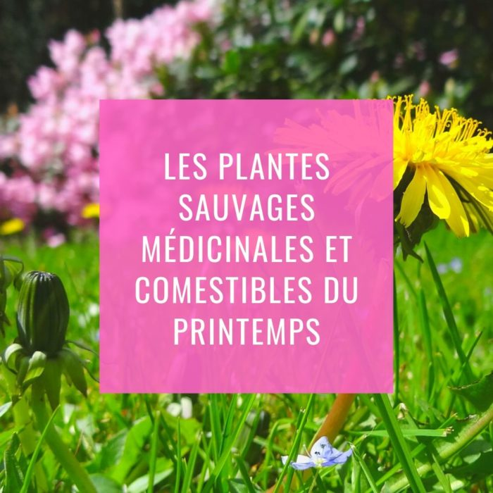 Sortie Découverte des plantes sauvages médicinales et comestibles du Printemps