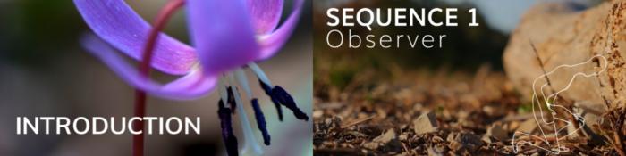 MOOC Botanique Bandeau - Forum