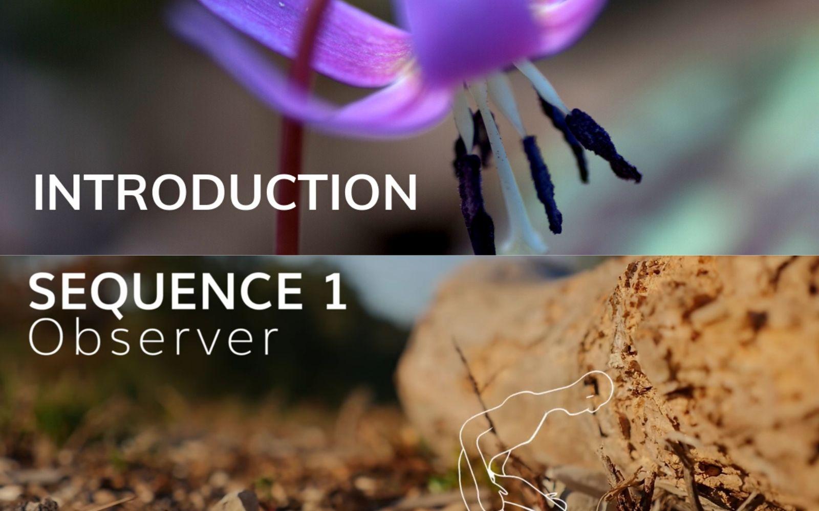 Ça y est, le MOOC Botanique est ouvert ! Cette semaine, deux séquences s'ouvrent pour commencer votre initiation à la botanique : la Séquence 0