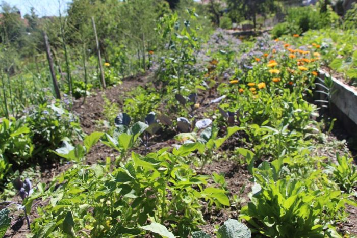 photos initiation permaculture