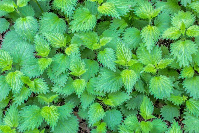 plant-3341475_1920