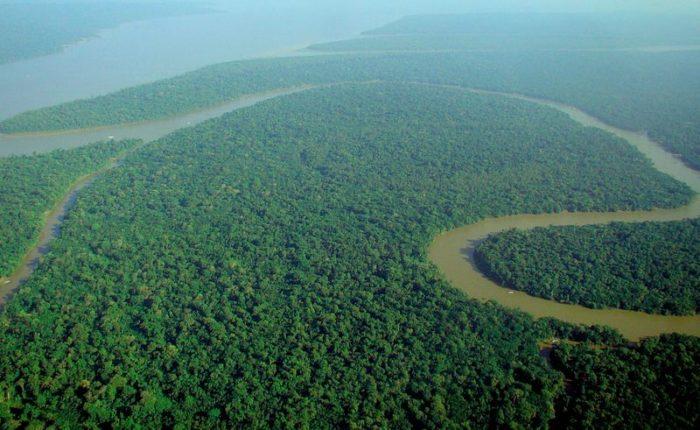 Vue aérienne de la forêt amazonienne