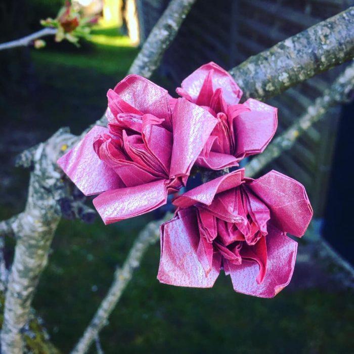 Prunus serrulata ´Kanzan'