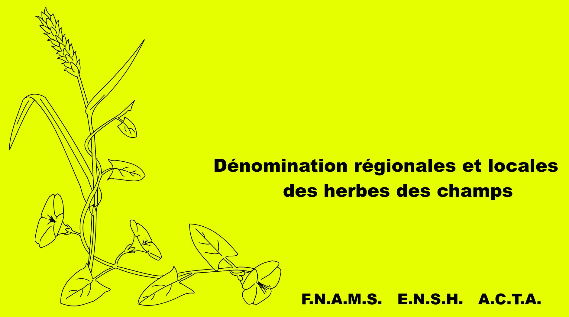 Couverture Dénomination régionale des herbes des champs