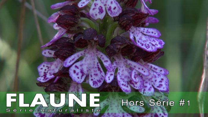 S1E13---Hors-Série