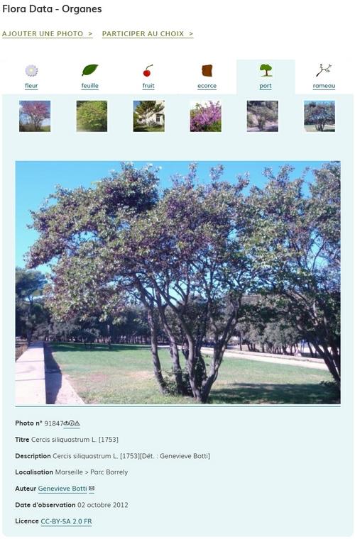Affichage des photos par organe dans eFlore