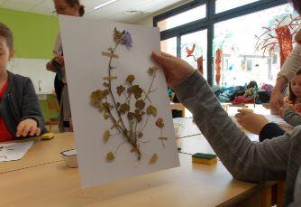 illustration d'herbier réalisés en atelier pédagogique