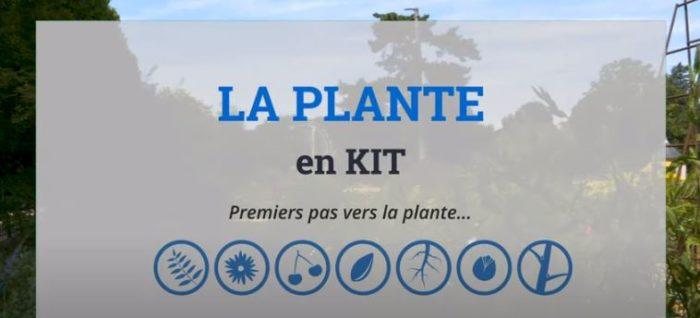 plante en kit