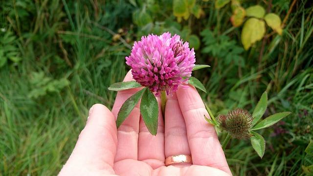 Apprenez à reconnaître les plantes sauvages médicinales et comestibles avec Isabelle Desfleurs