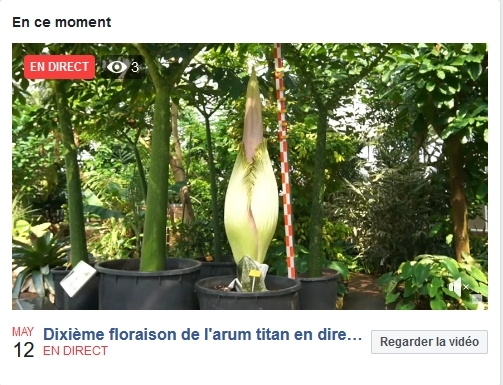 livestream_FB_FR