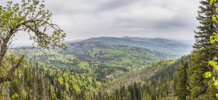 view_bavarian_forest_bavaria_rachel_czech_republic_border_area_forests_trees-1438343