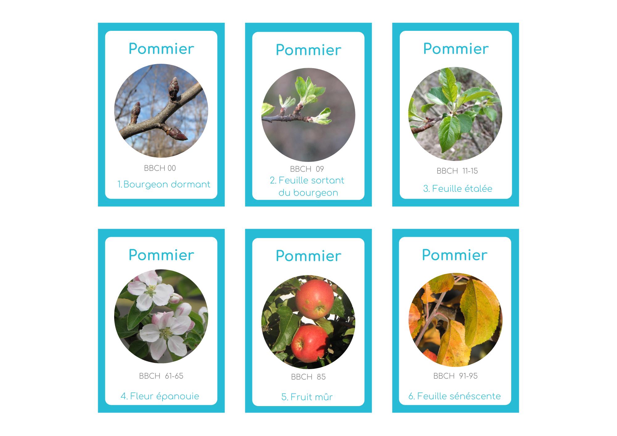 Jeu Des 7 Familles Sur Les Rythmes Saisonniers Tela Botanica