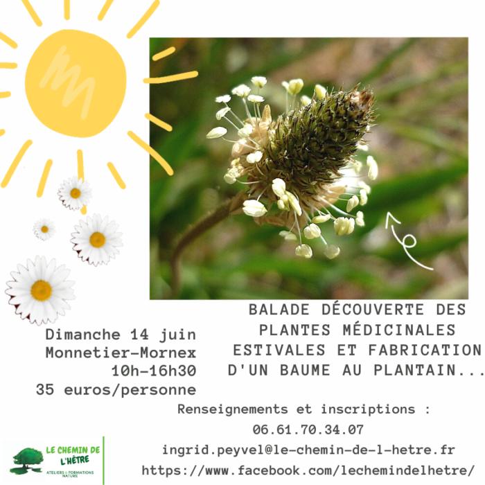 Balade plantes médicinales 14.06