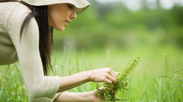 Baptême Sauvage, un stage pour débuter la cueillette de plantes sauvages médicinales et comestibles