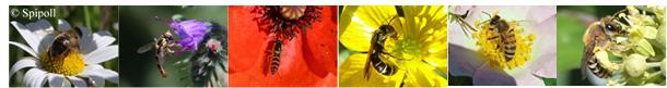 PollenPourLesPoll