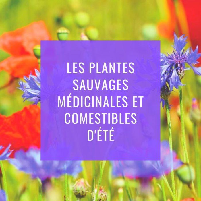 Sortie Découverte des plantes sauvages médicinales et comestibles d'été