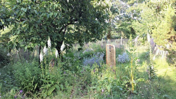 Visite guidée Plantes sauvages comestibles du jardin Parc Floral Paris 1024