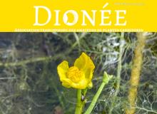 dionee logo n°86