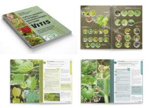 Guide botanique vitis vignes sauvages CBNFC-ORI