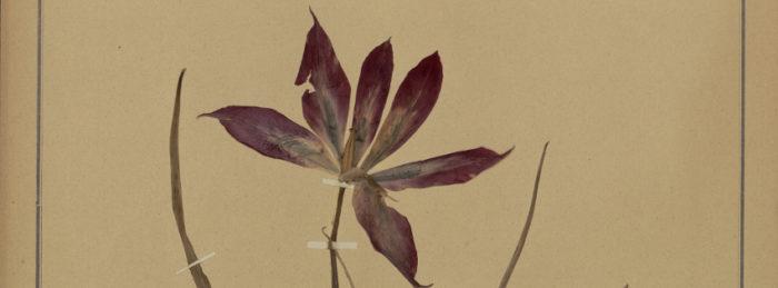 Specimen d'herbier - photo d'illustration