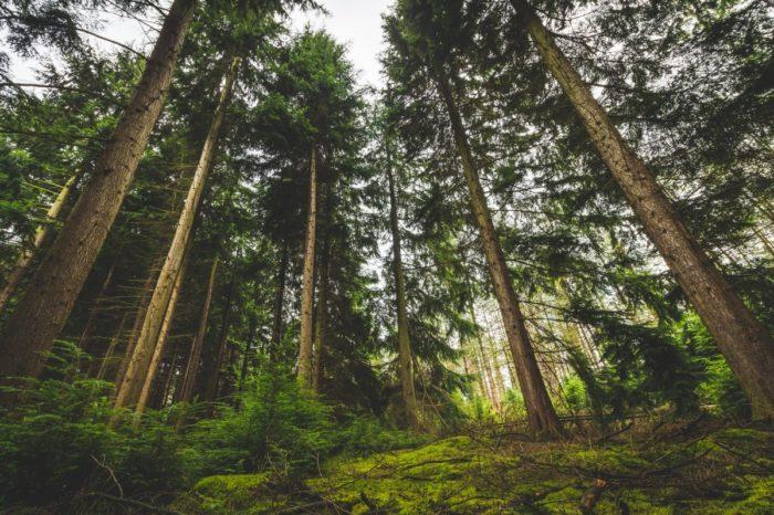 Forêt - CC0 Domaine public