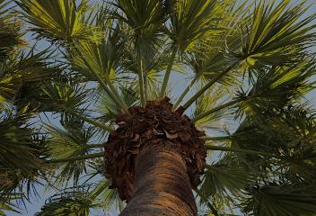 formation botanique et gestion des palmiers