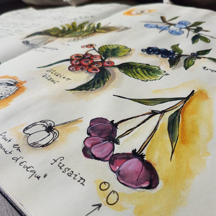 COLPIZEN Botanique fruits