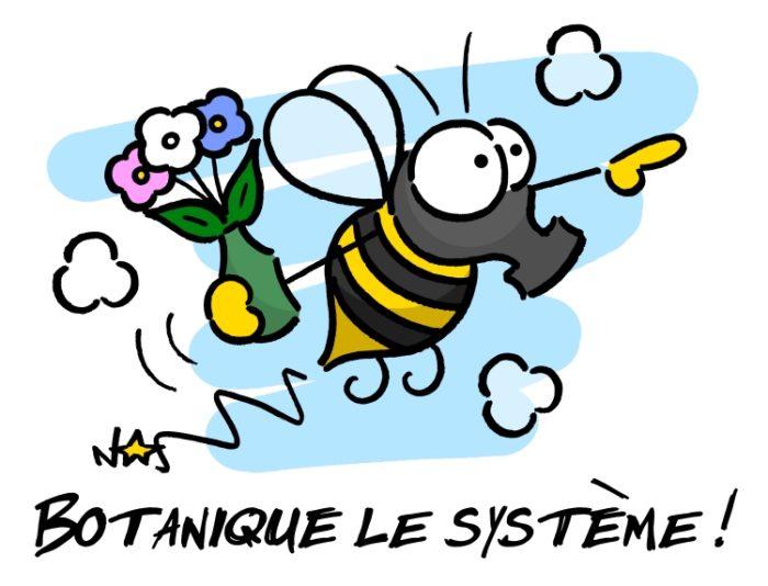 botanique_le_systeme