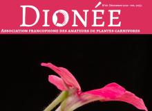 Dionée n°88