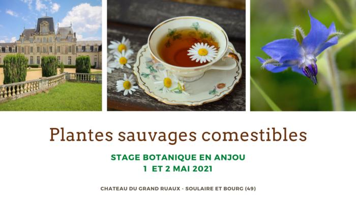 Stage plantes sauvages de l'Anjou