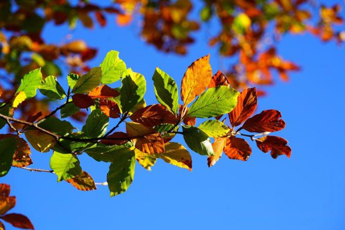 fall-foliage-2822593_1920