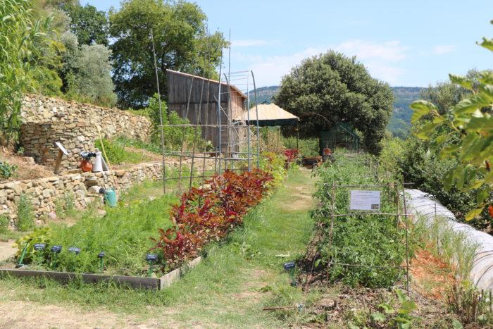 potager en permaculture à Valsaintes valsaintes