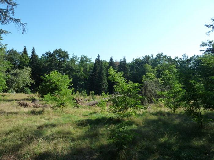 Clairière dans le parc de Parilly