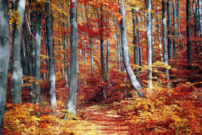 fall-3089995_1920