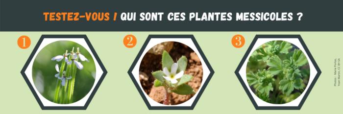 3 plantes